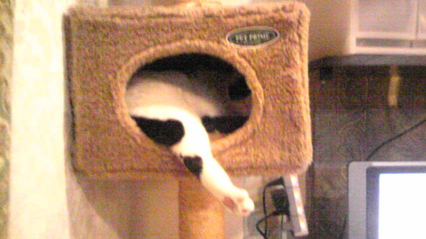 猫の恵(ケイ)ちゃんでーす。